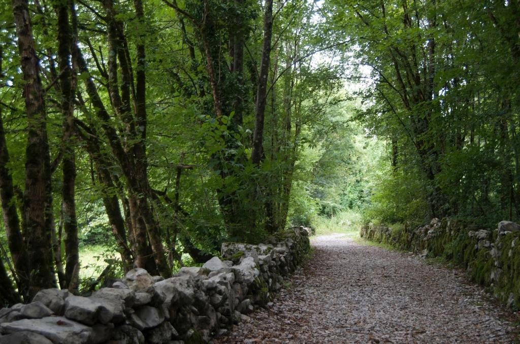Greening Path by Tony Park; to show hope.